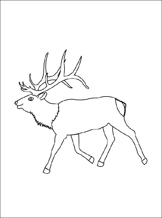 free elk coloring pages Coloring page Elk Coloring pages