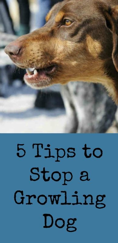 5 Tips To Stop A Growling Dog Dog Growling Aggressive Dog Dogs
