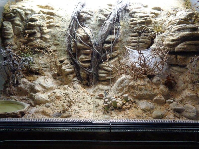 meine Terrarien - Terrarienpics - Vogelspinnenstammtisch Schweiz - kunstfelsen selber machen