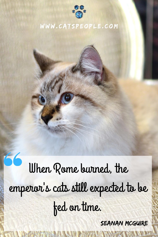 Cat Quote Cat Quotes Cat Parenting Cats