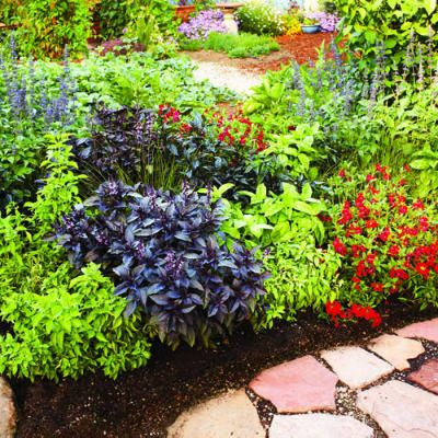 3 colorful easy care spring borders salvia eggplants Low maintenance garden border ideas
