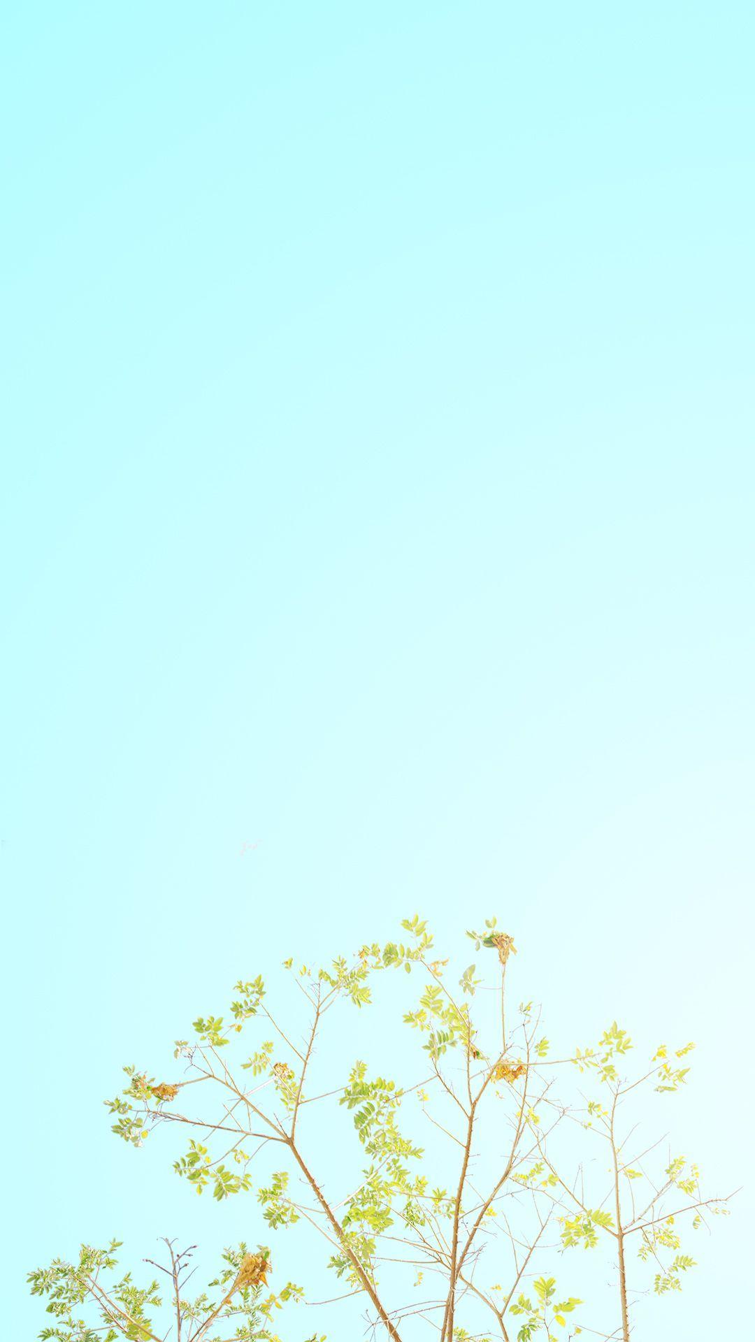 Minimalist Spring Wallpaper HD Free download