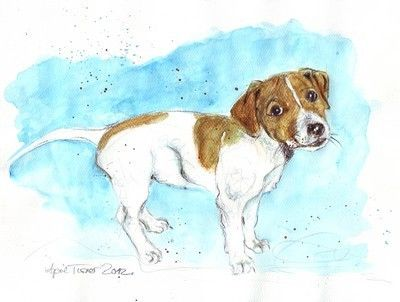 Jack Russell Welpe 2012