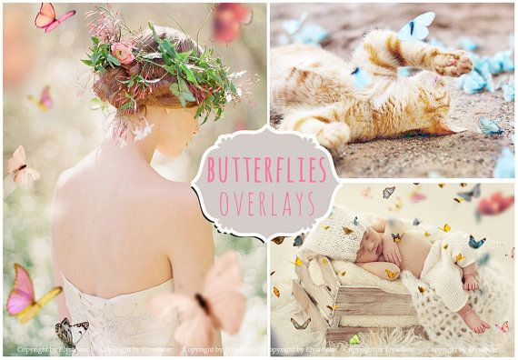 Butterfly Photoshop Overlays PNG: Realistic Natural by ElyseBear