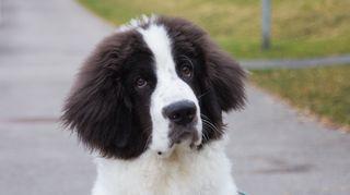 a deserter puppy