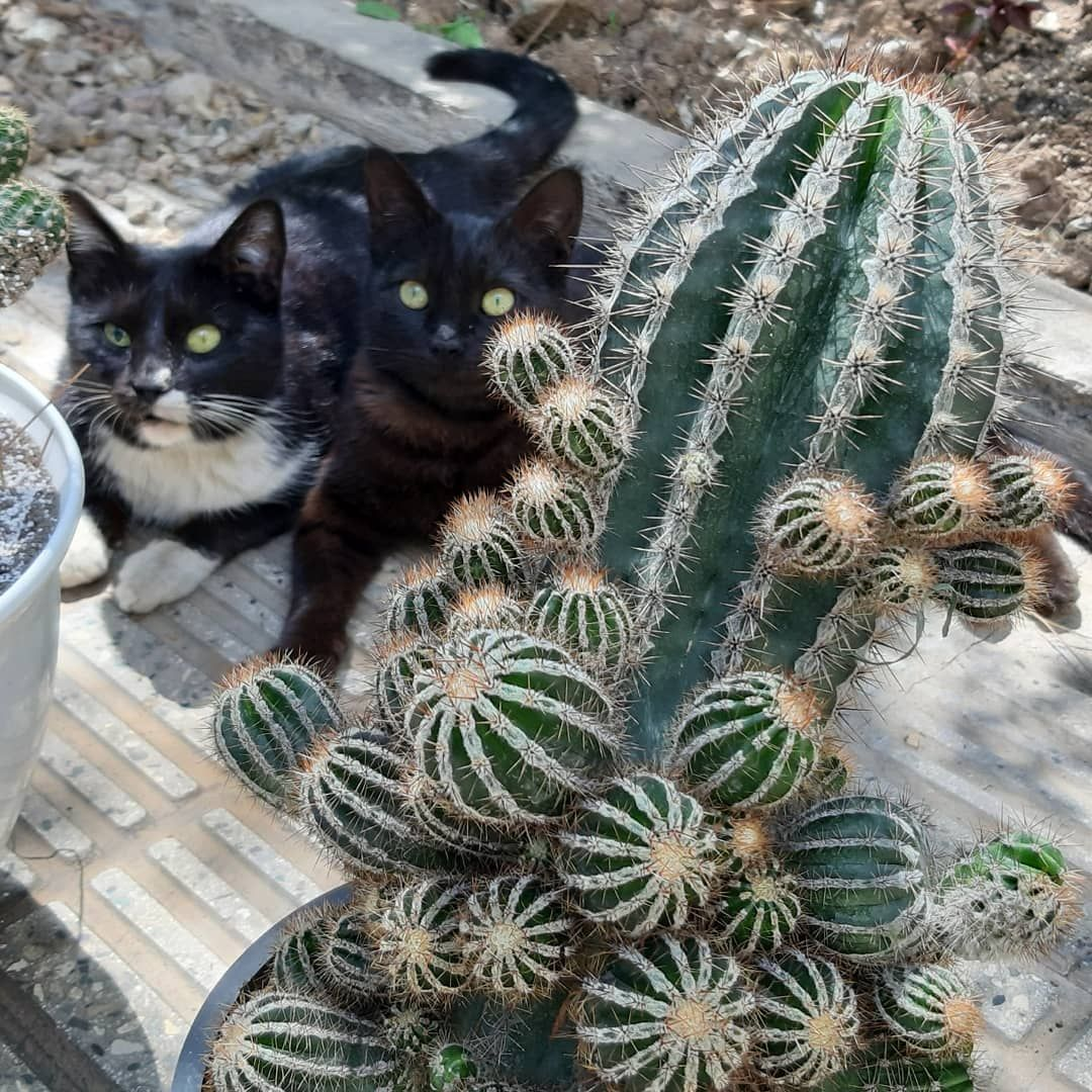 Cactus fun to have, touch gingerly, hard to kill. Most