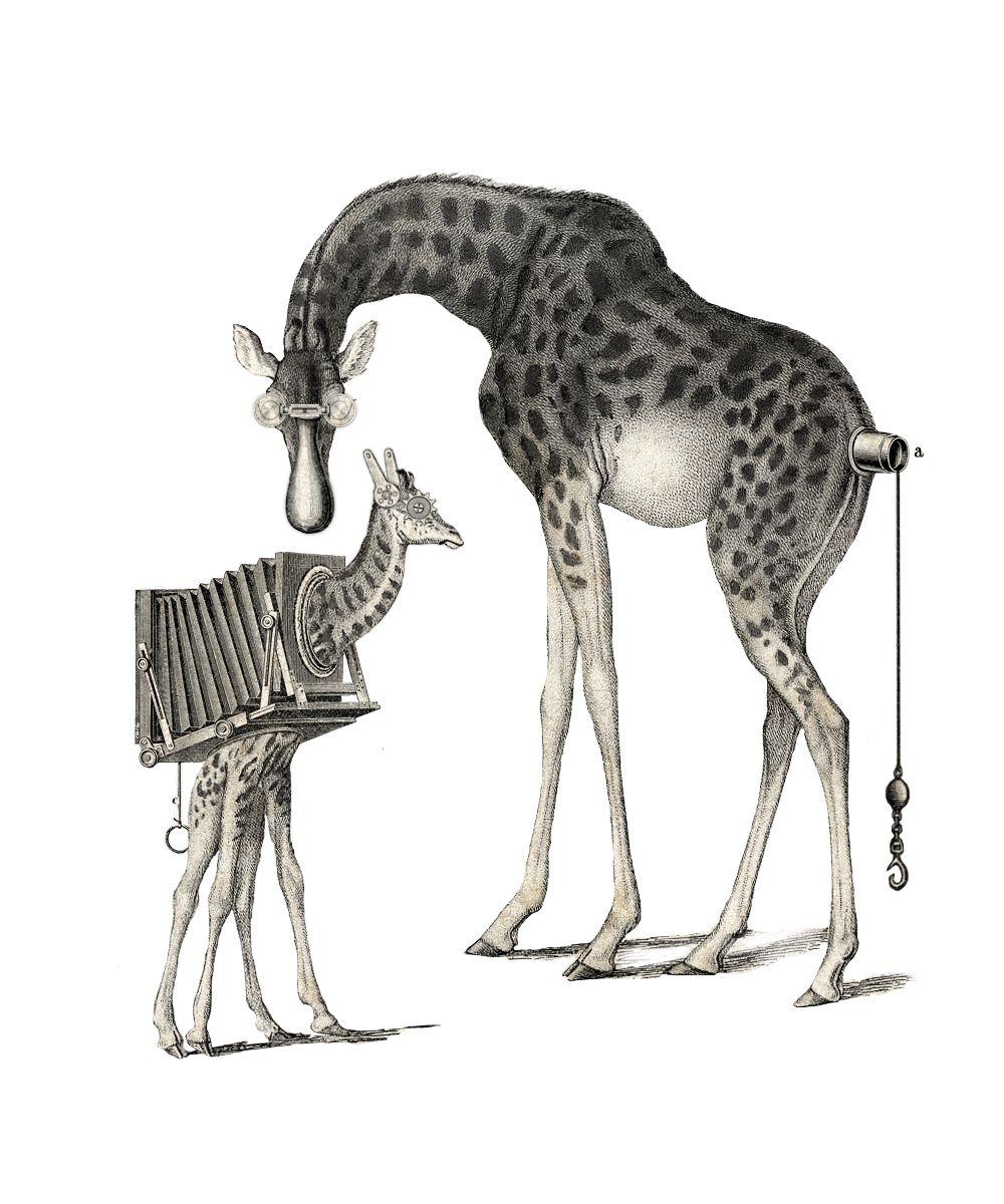 Animales Mecanicos Dibujos Para Colorear picture gallery