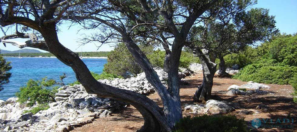 Vladi Private Islands Places To Retire Island