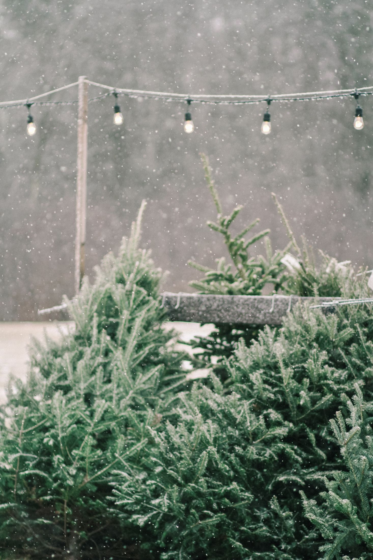 Shopper\'s Diary: A Christmas Tree Farm in Maine | The Latter Seasons ...