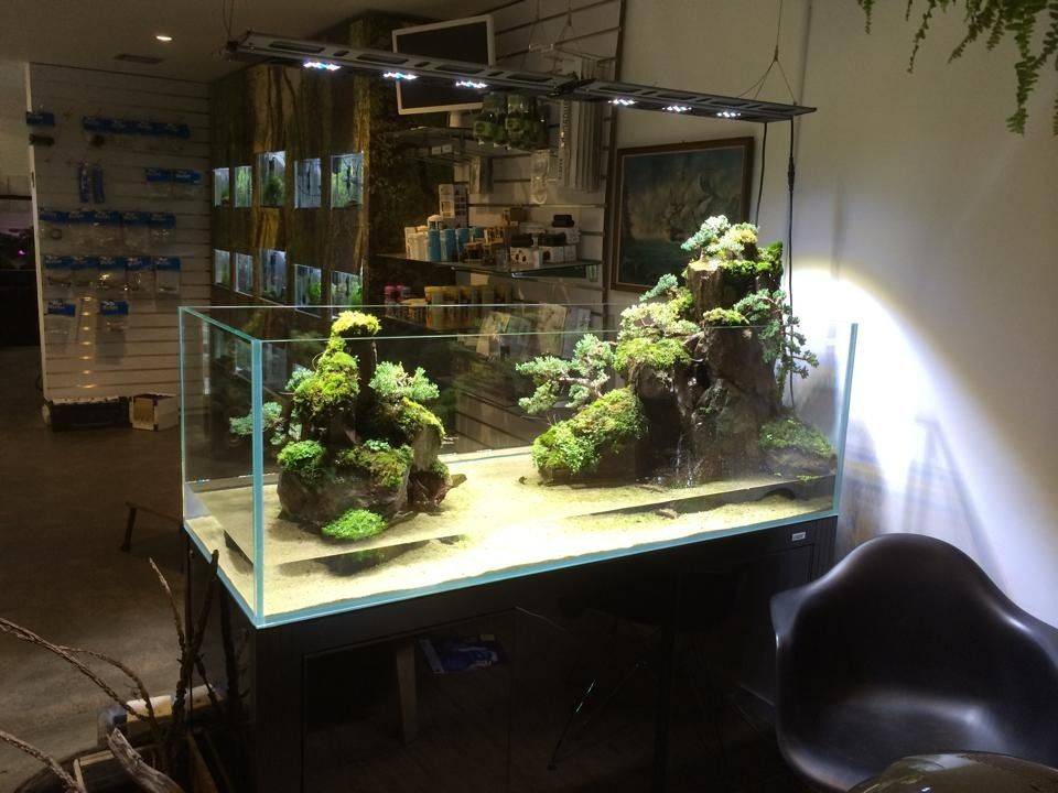 """Favourites: tank by Adrian Weinberg One of the most impressives layout I have seen this year. This post deserves a reblog (original from joshscape below) """" Theres something in the water down under...."""