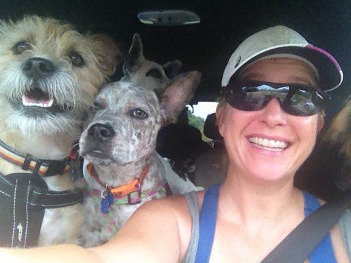 Dog car restraints  Dog seat belts Dog car safety