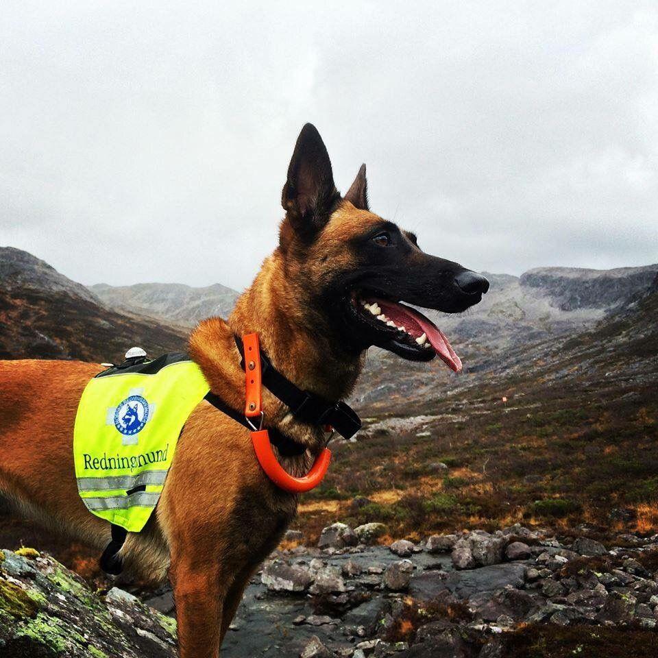 @NrhHordaland: Redningshunder på vei til Lofthus i Hardanger #redningshund @redningshunder  http://bit.ly/1P6YeIv