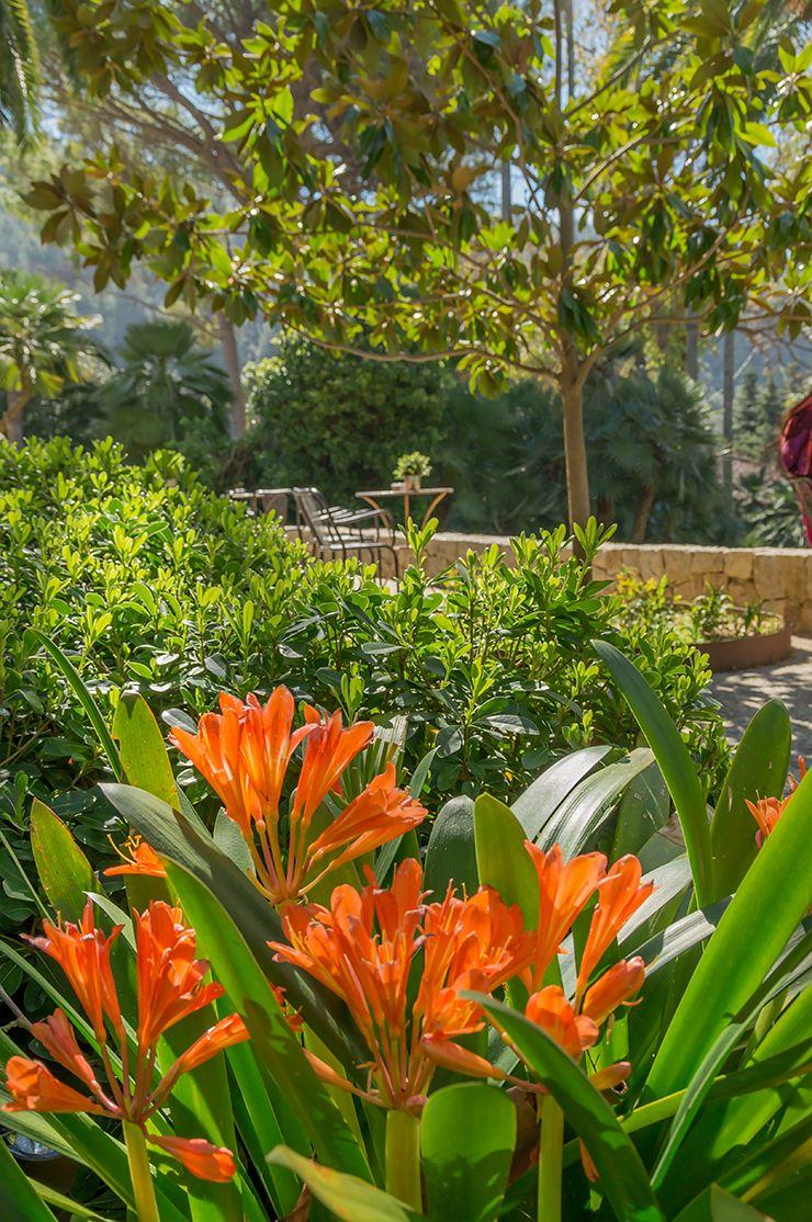 Garten Von Alfabia Auf Mallorca Ausflug Tipp Bei Soller