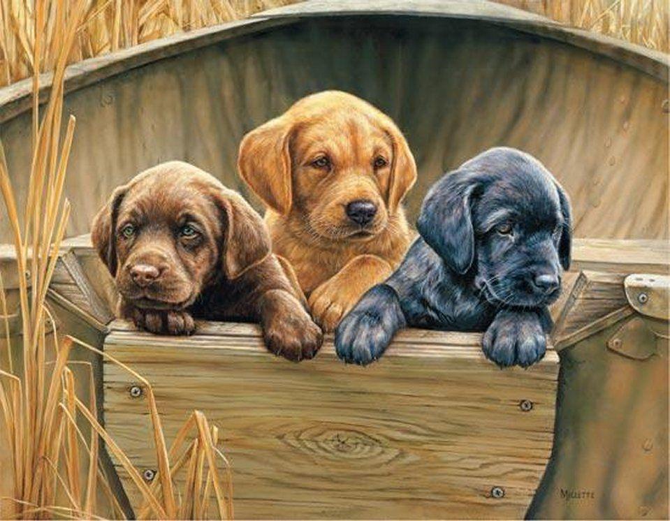 Картинки декупажные собаки