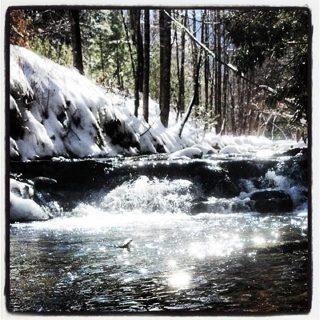 Appalachian Wanderings, Fly Fishing, Trout Bum