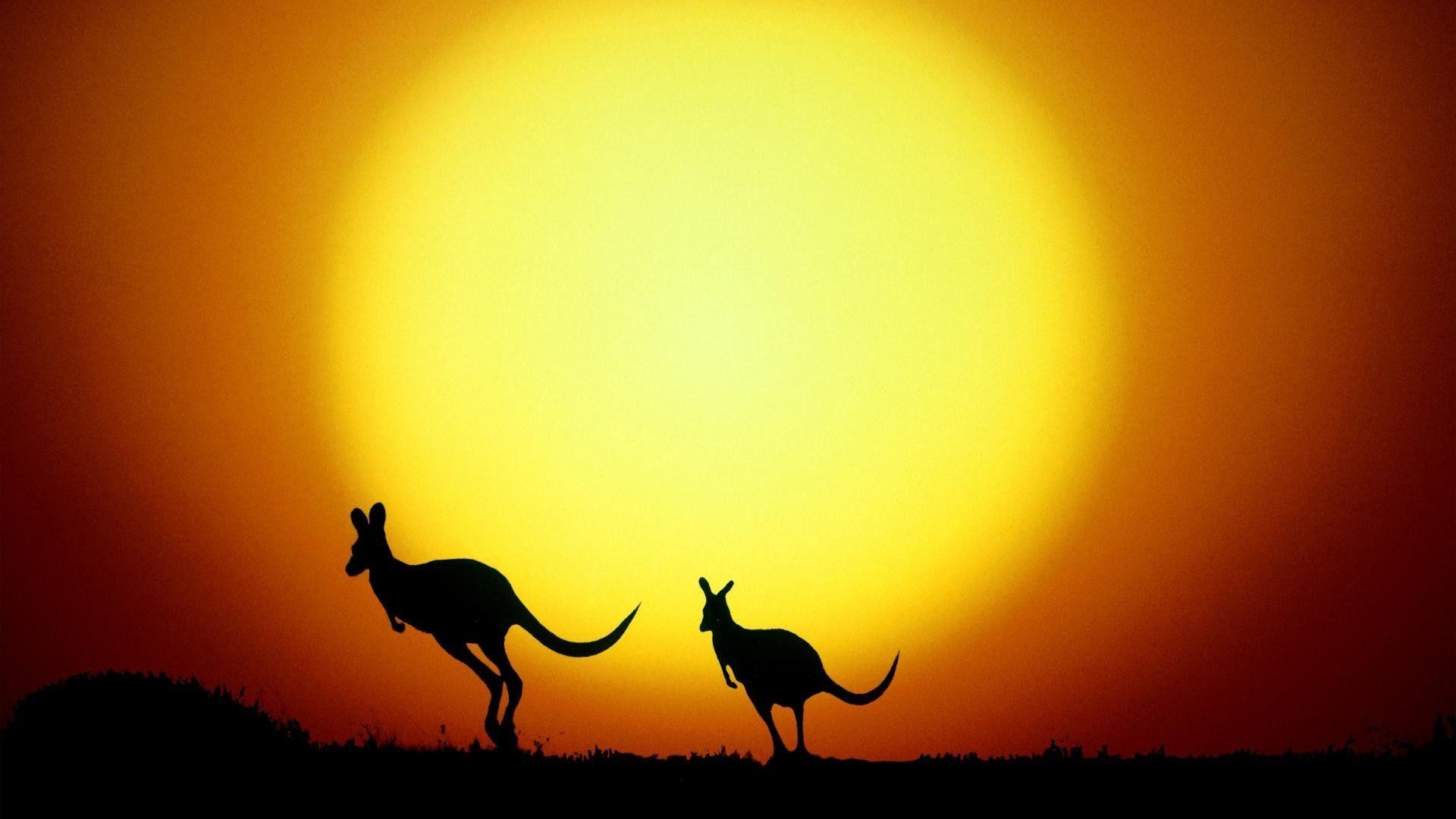 Kangaroo Wallpapers And Backgrounds