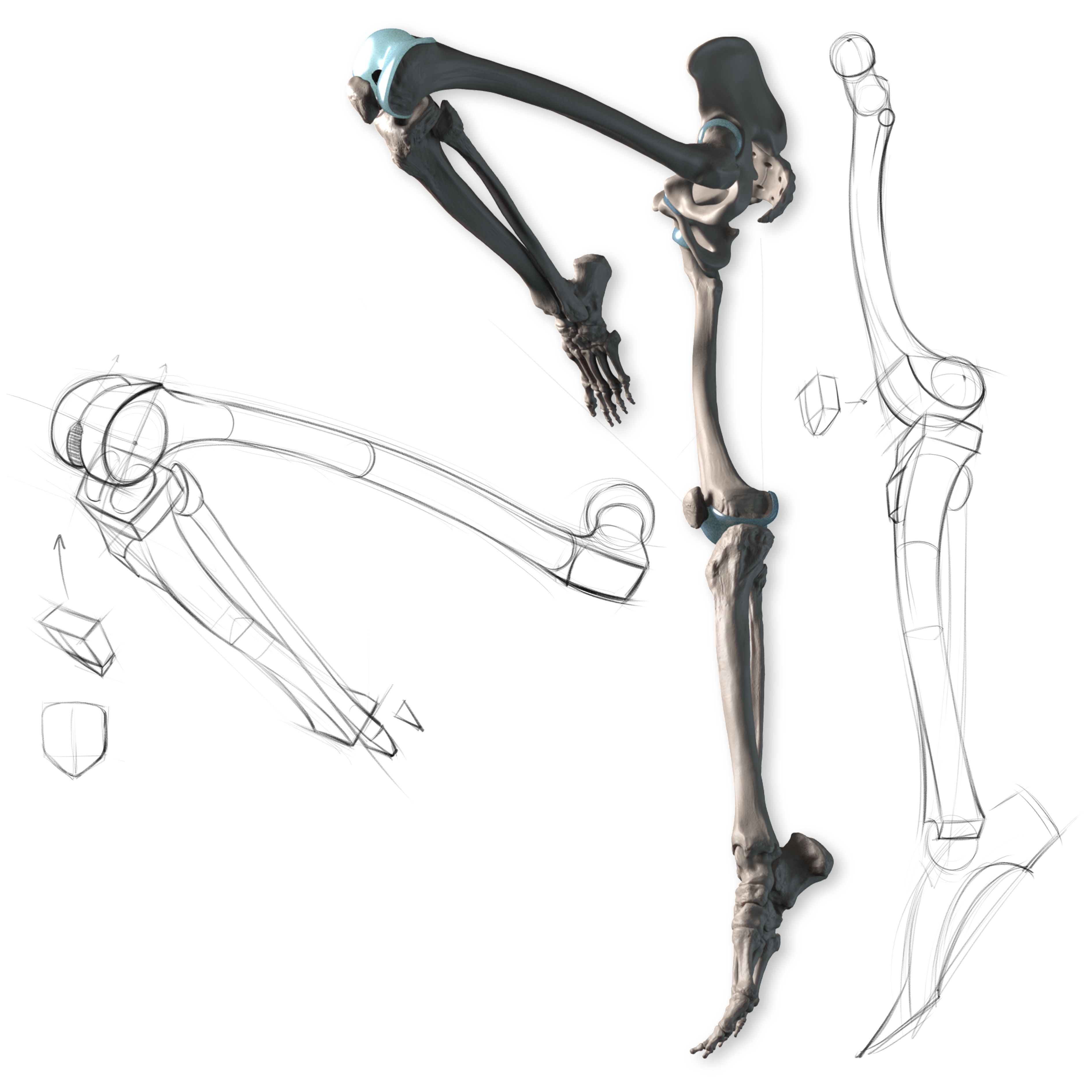Anatomy of the Human Body for Artists Course  skechs  Pinterest