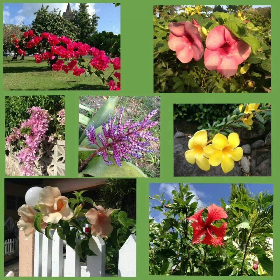 Flora St. Kitts