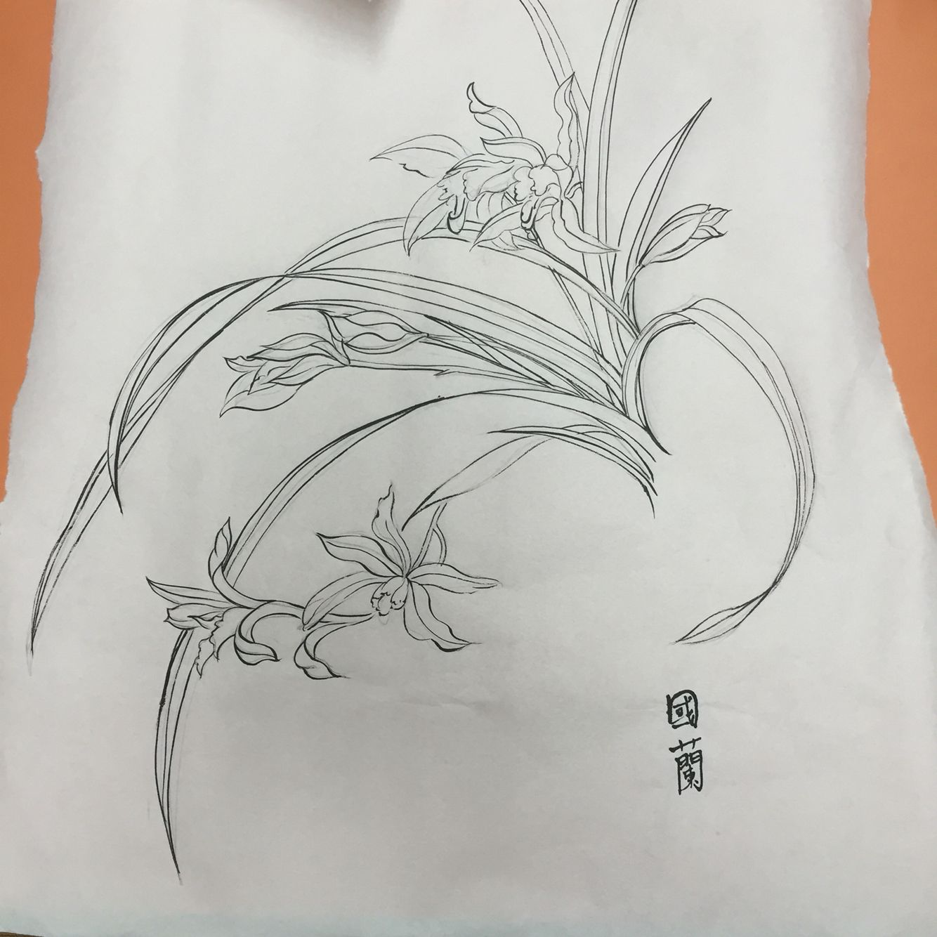 Chinese Line Drawing Orchid Orchid Flower Drawing Chinese Brush Painting Orchids Drawings