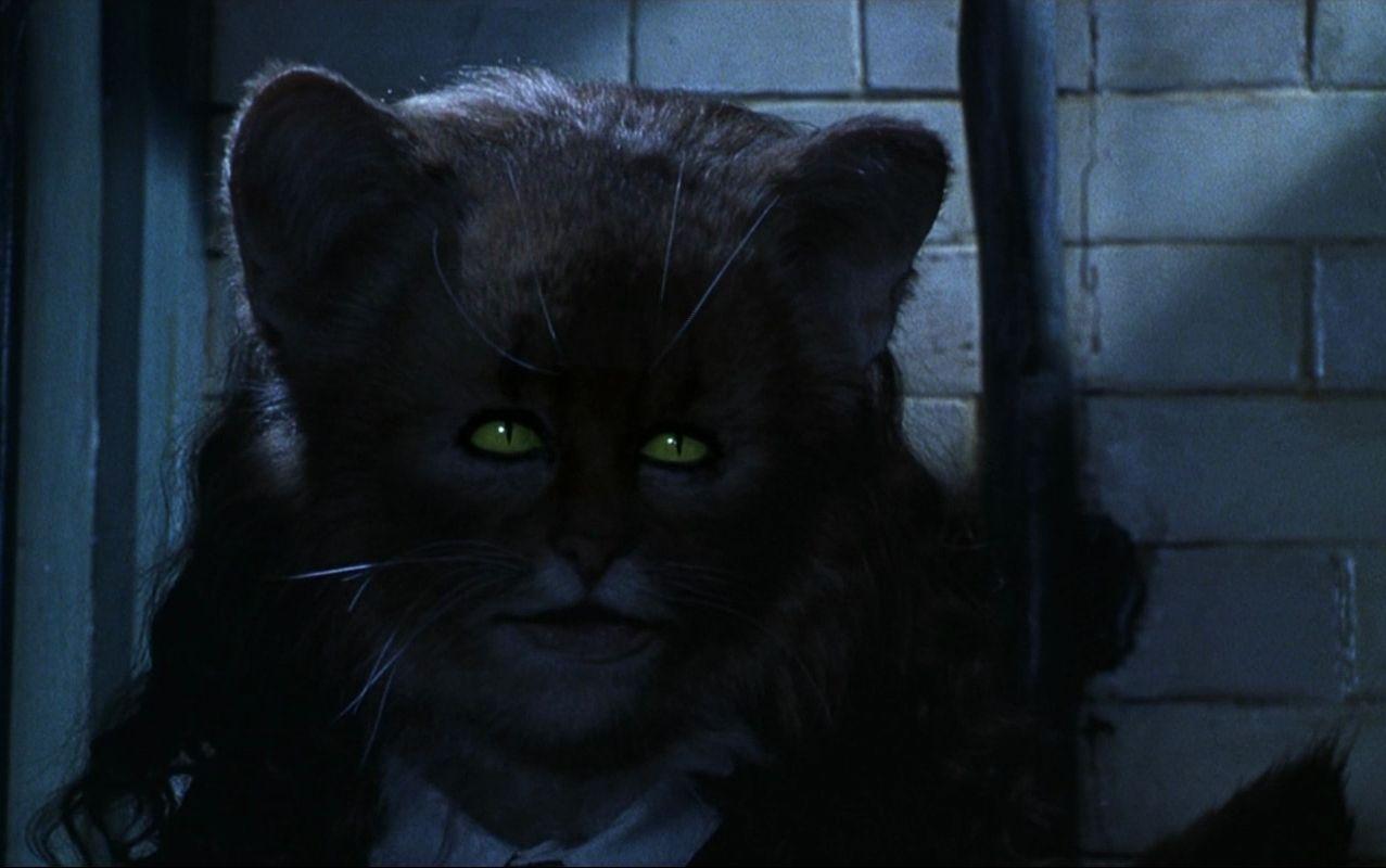 Hermione as a cat Harry potter land, Harry potter
