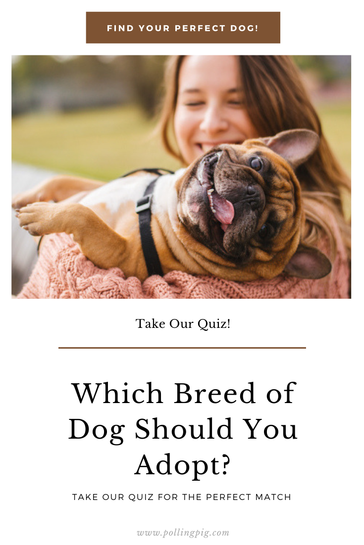 Which Breed of Dog Should You Adopt? Dog quizzes, Dogs