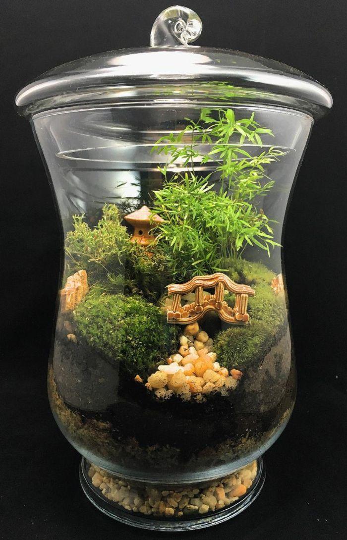 diy faire son propre terrarium plante pour d corer la. Black Bedroom Furniture Sets. Home Design Ideas