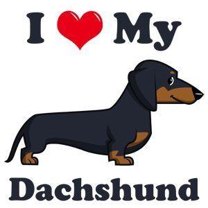 I Love My Dachshund Dachshund Cartoon Dachshund Dog Dachshund