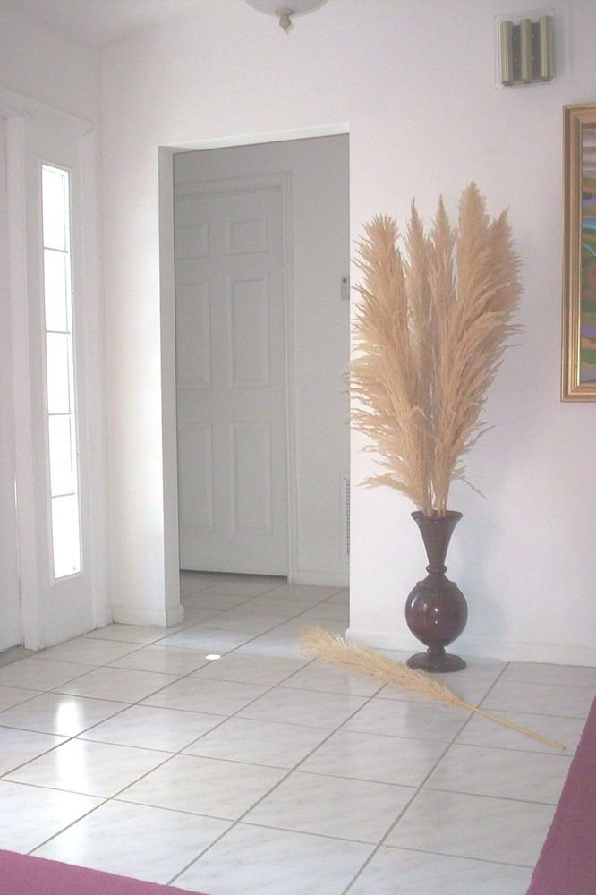 Dried Plumes Natural Pas Grass 5 Feet Tall Box Of 10 Rhpinterest: Dried Grasses Home Decor At Home Improvement Advice