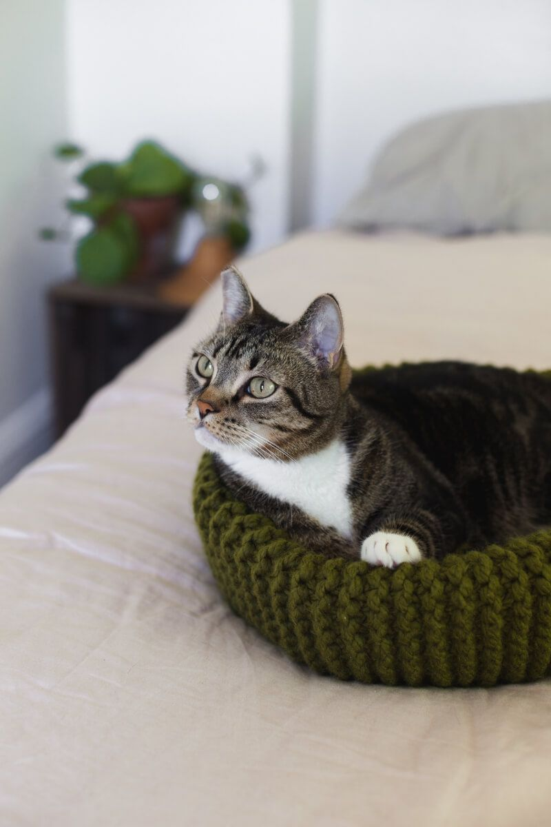 Make Your Own Knit Cat Bed | Cat bed pattern, Knitted cat ...