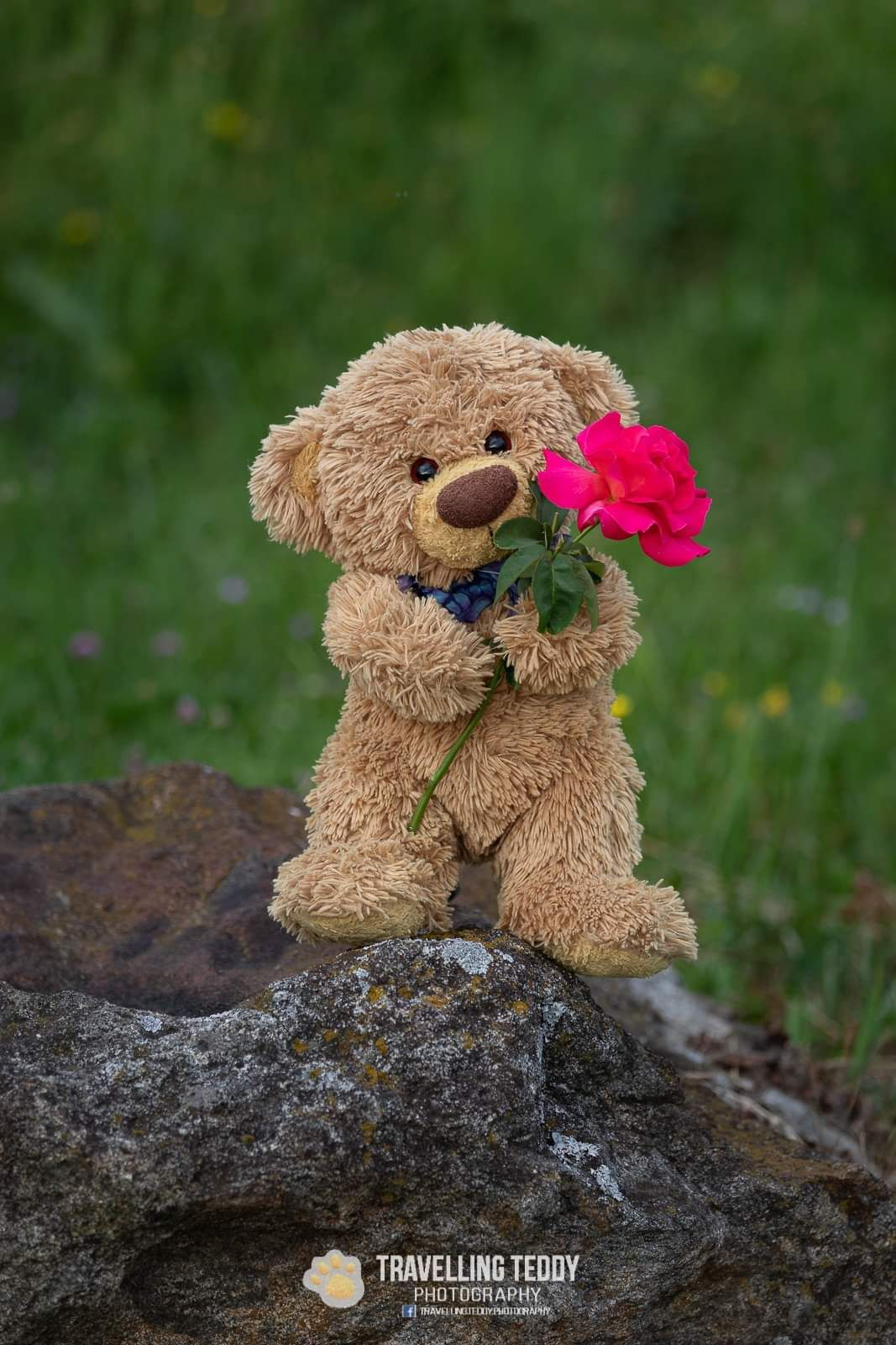 Pin On Teddy Bear Cute teddy bear wallpapers for android