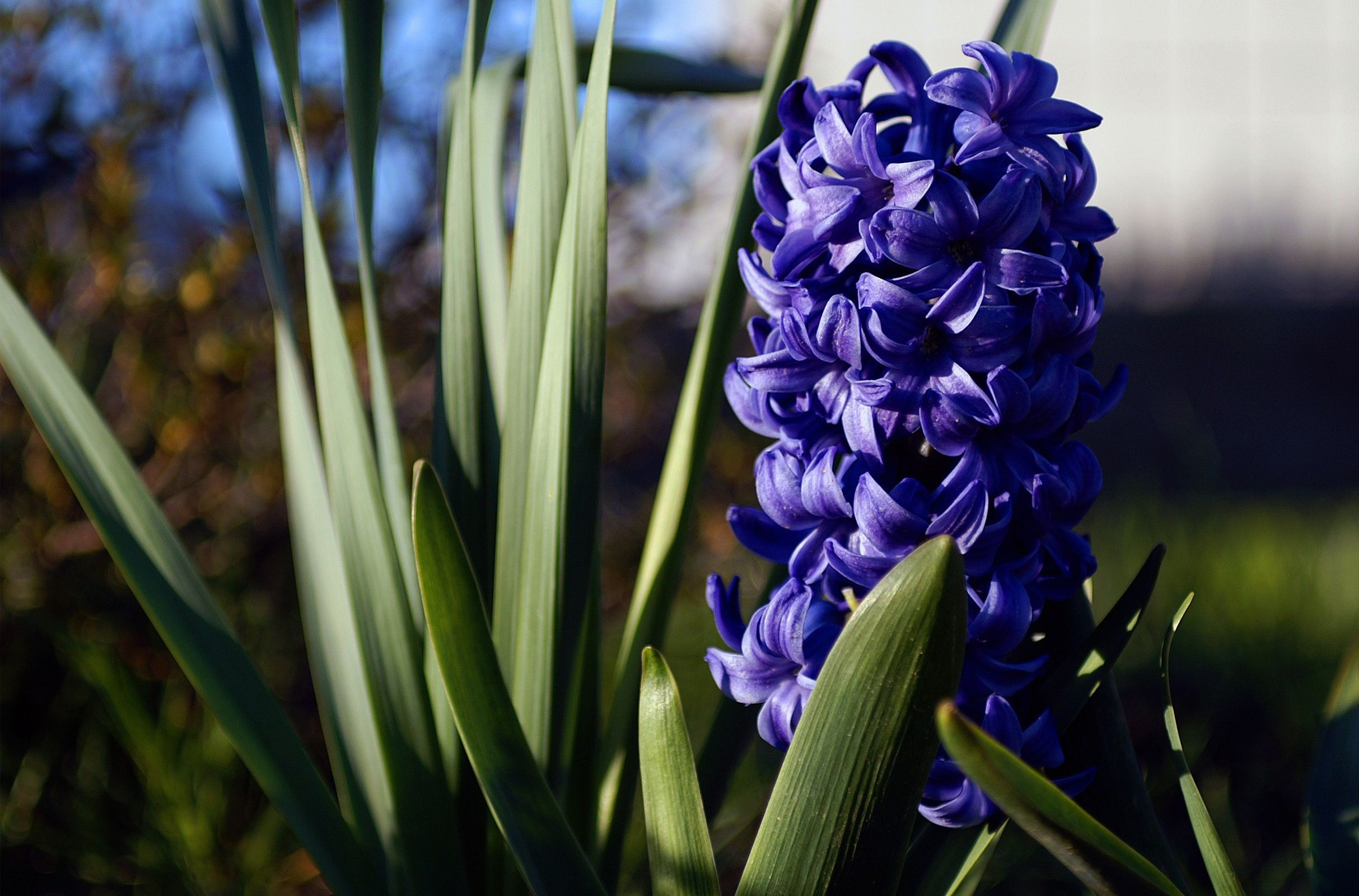 Beautiful-flower-