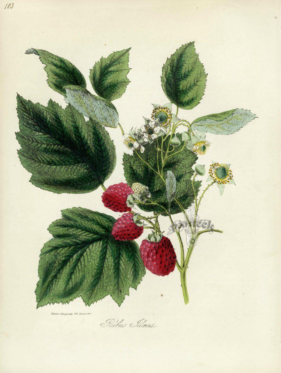 знаменитого ботанические рисунки растений открытки правильно