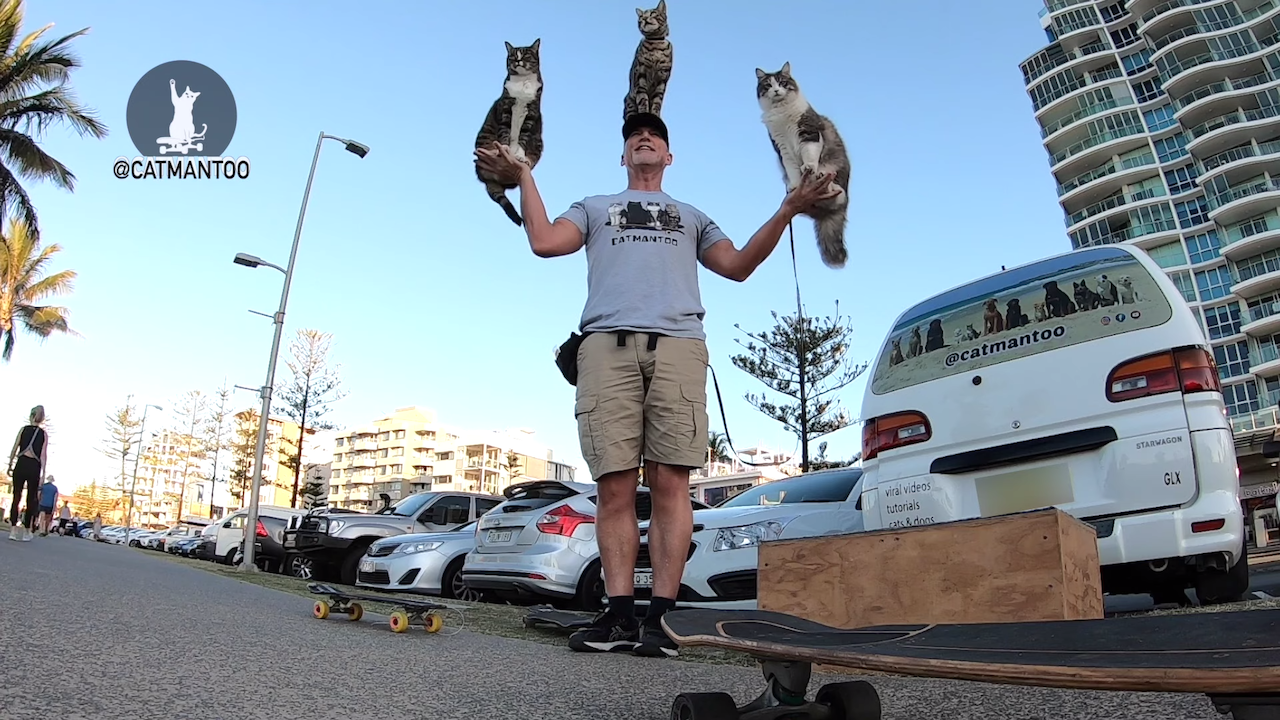 Didga the Skateboarding Cat and Her Feline Siblings Form a