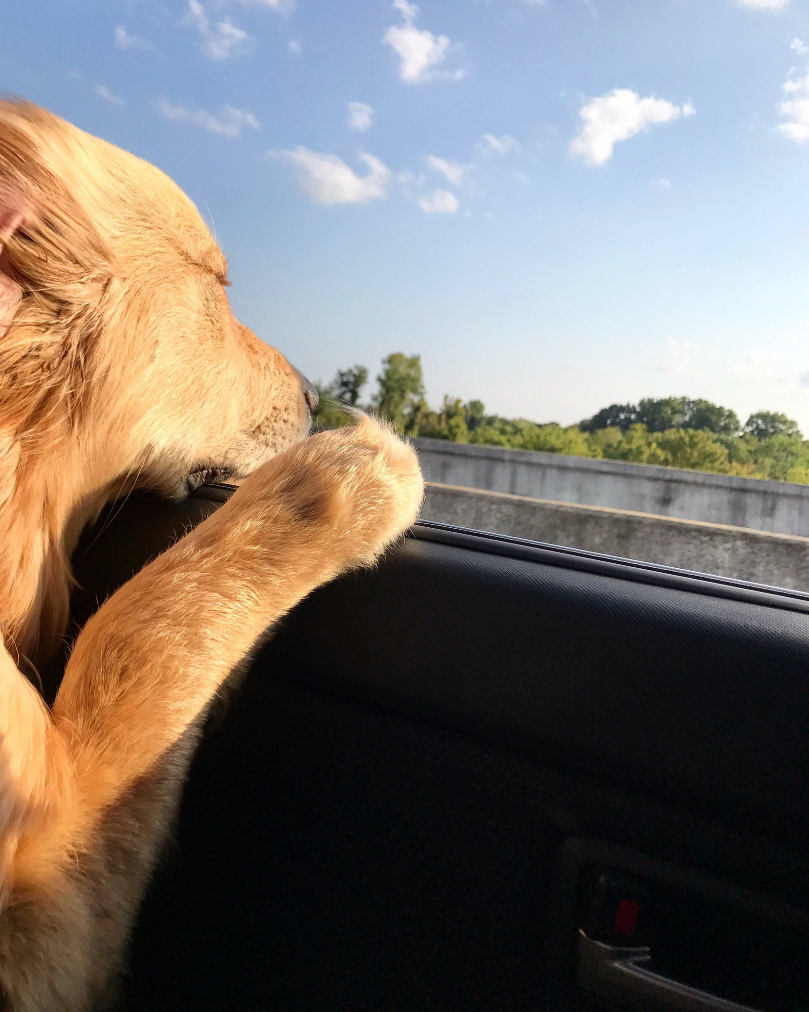Weekend Road Trips With The Pup Golden Retriever Full Bread