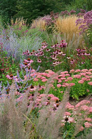 prairie planting russian sage echinacea sedums and grasses gardening pinterest garten. Black Bedroom Furniture Sets. Home Design Ideas