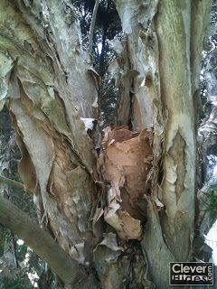 more photos watch huge sale Natural bark tree camouflage geocache. | Geocaching---take ...