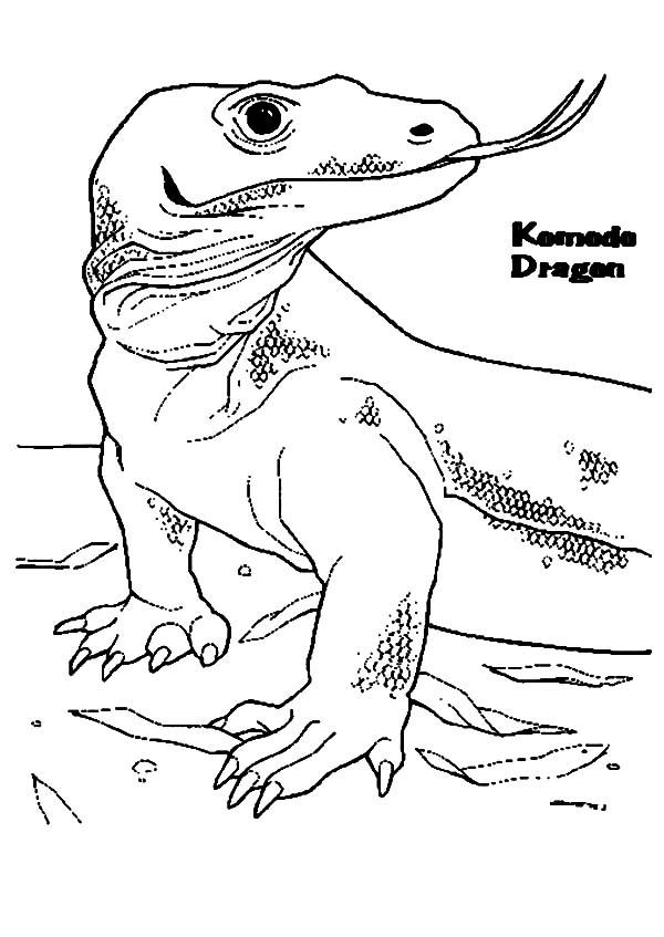 35 Komodo Dragon Coloring Pages Ideas