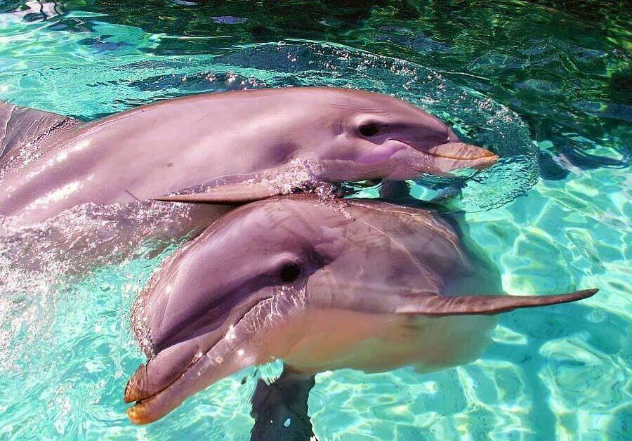 овертайме фото разновидности дельфинов специально еще для