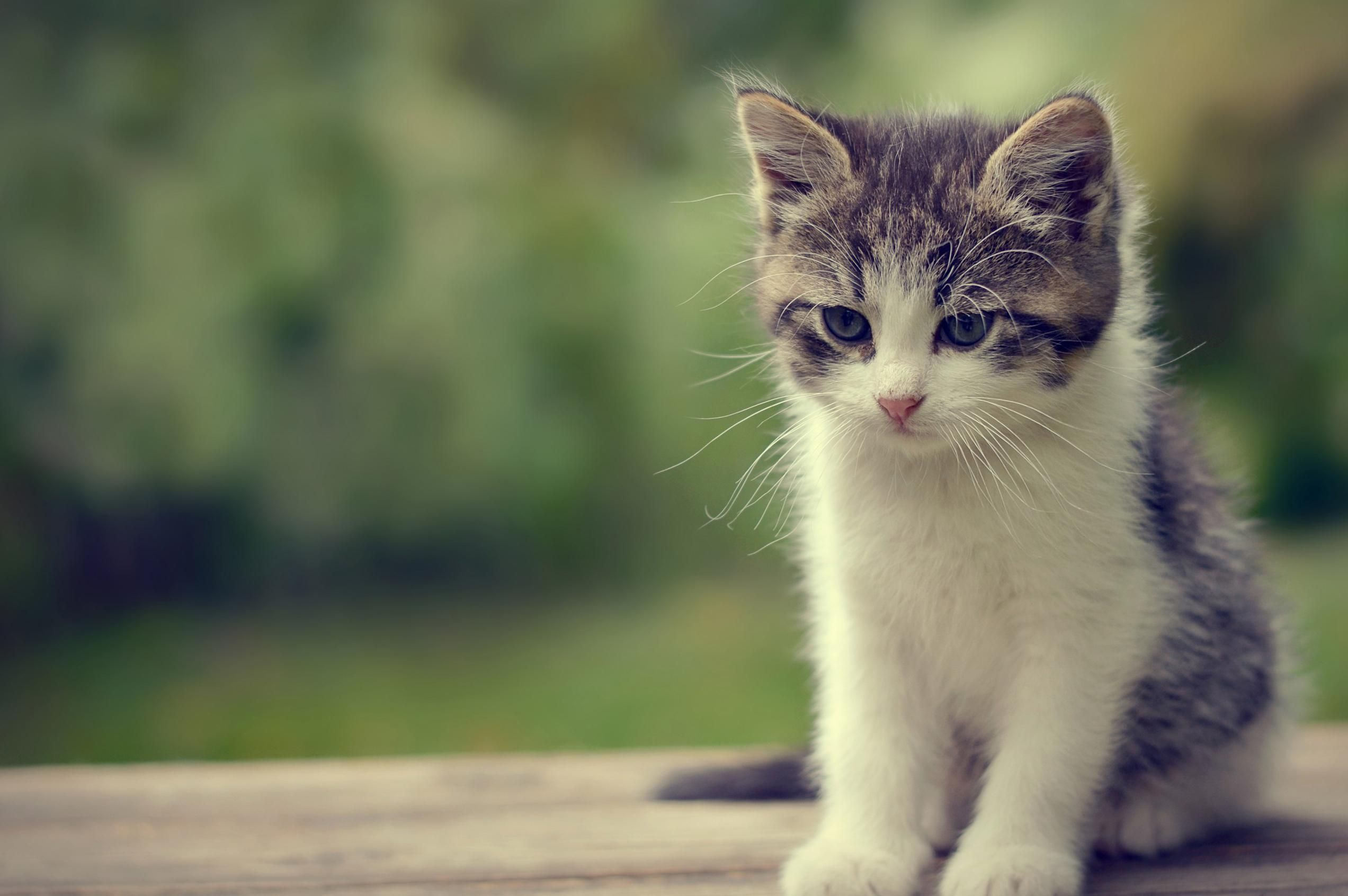 Angry Kitten For Invasion Of His Privacy Cute Dogs Crazy Cats Fancy Cats