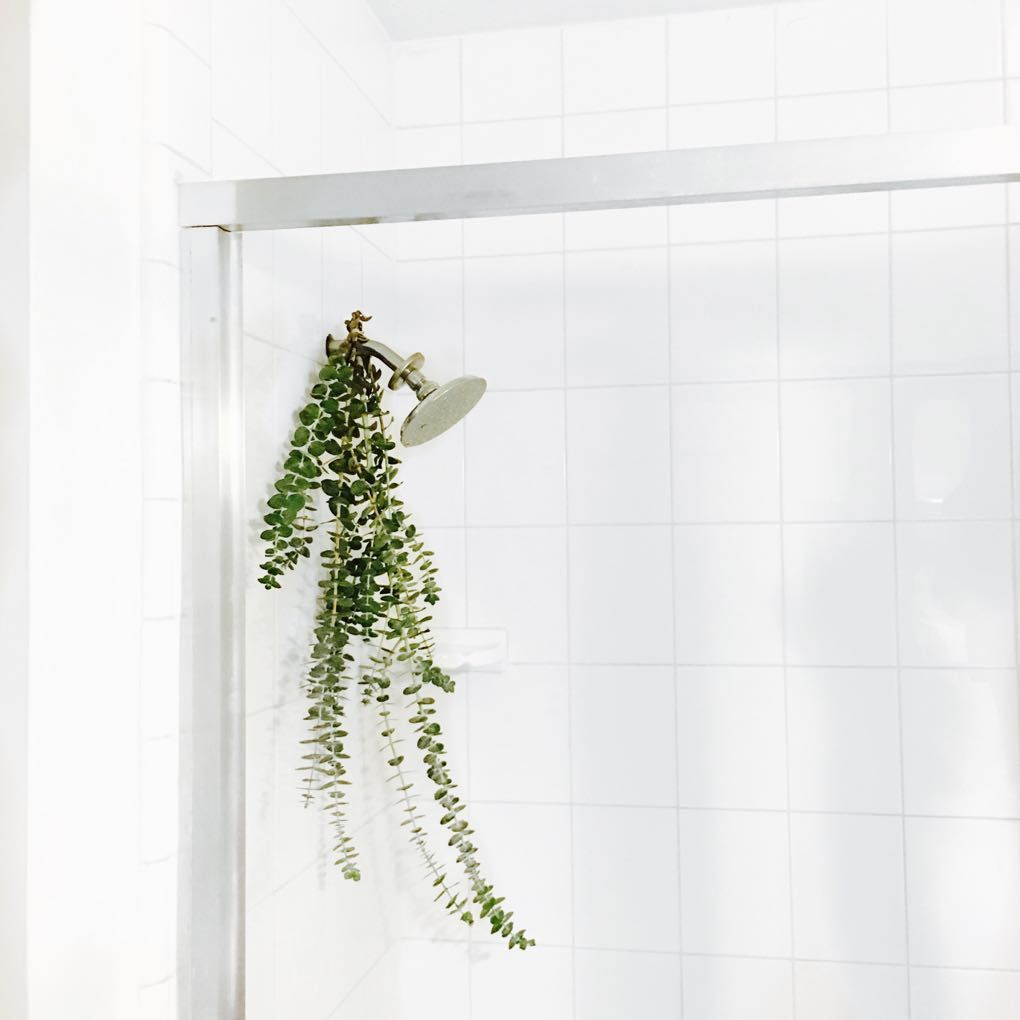 Tip Hang Eucalyptus Leaves In Your Shower The Steam Releases Essential Oils That Act As A Natural Decongestant