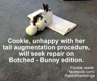 Joanna+Busija+2017-07-18+Cookie+butt+-+Botched+Bunny-edition+meme.jpg (326×272)