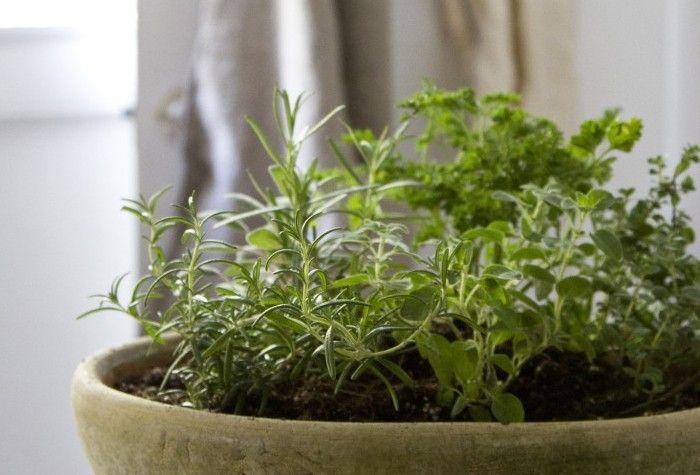 Small Space Diy Countertop Herb Garden Herb Garden Pots Small