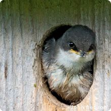 Which bird house do your backyard birds need from @National Wildlife Federation