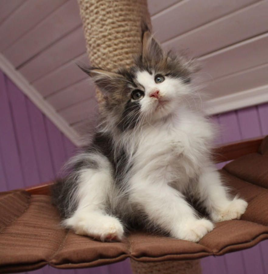 Pin On Kitten Pictures