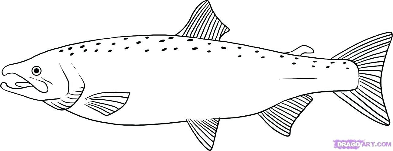 Salmon Coloring Pages How To Draw A Salmon Step 6 Salmon Coloring