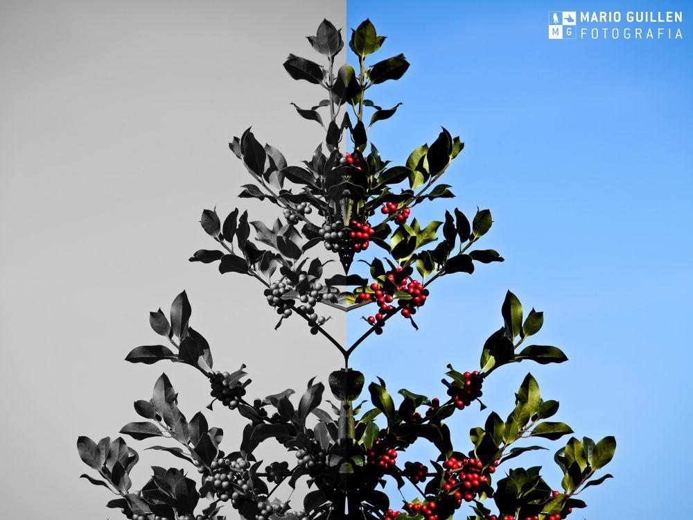 Plantas colores y B/N by mariogm13