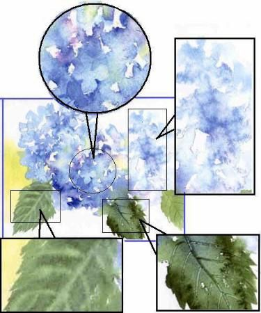 Hydrangeas watercolor painting; site has lessons, free images, etc. Susie short