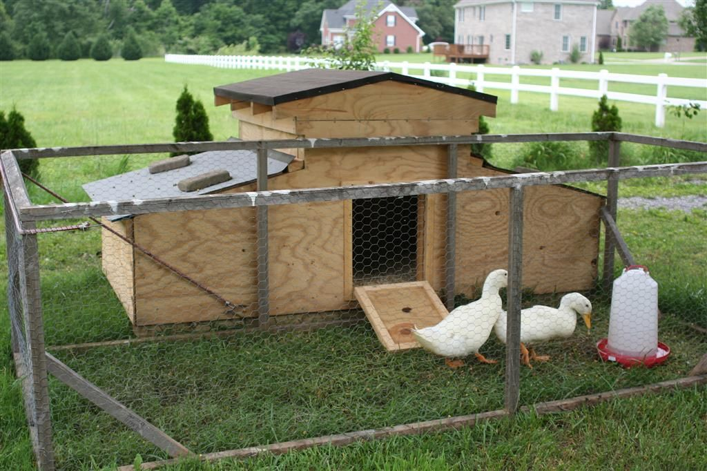 Duck duck goose on pinterest raising ducks duck house for Chicken and duck coop