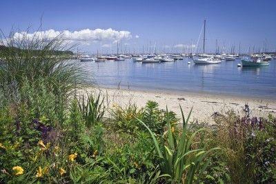 Salt resistant gardens plants that tolerate salty soil for Cheap honeymoon ideas east coast