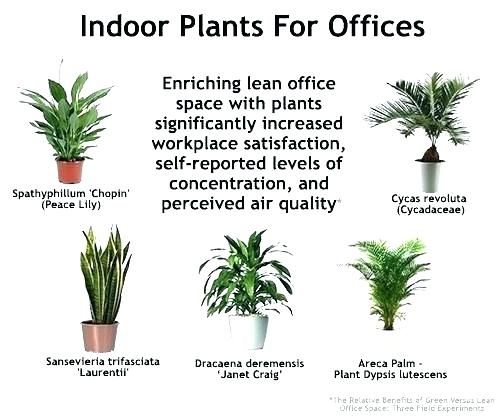 Merveilleux Image Result For Best Plants For Office With No Natural Light